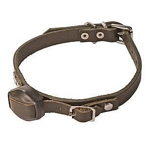 Terrier Collar