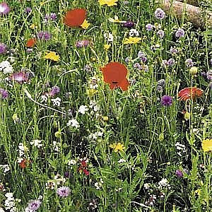 Proflora 8 Old English Meadow Mix 1kg
