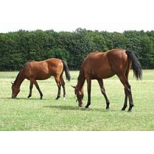 HorseMax Paddock Mix 10kg