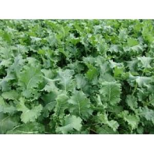 Goldeneye Kale 1kg