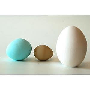 10 Dummy Eggs