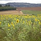 view Sundown Maize/Sunflower Mix 13kg details