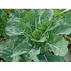 view Thousand Head Kale 1kg details